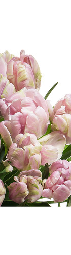 Mother's Day - Pink Parrot Tulip Bouquet