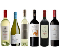 Autumn Mixed Case - The South American Selection